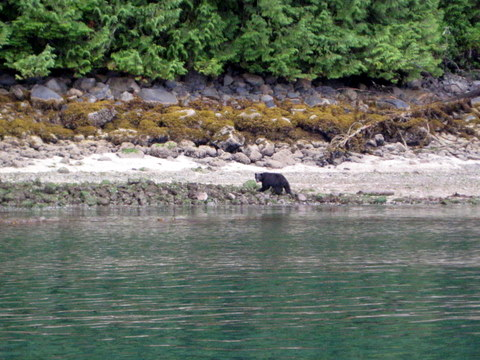 Bear on beach near Watson Point