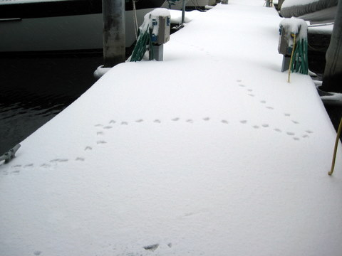 Wildlife footprints in the snow